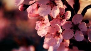 modazip avon flor de cerezo