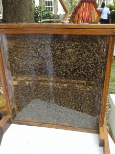 modazip-burts-bees-propia-2